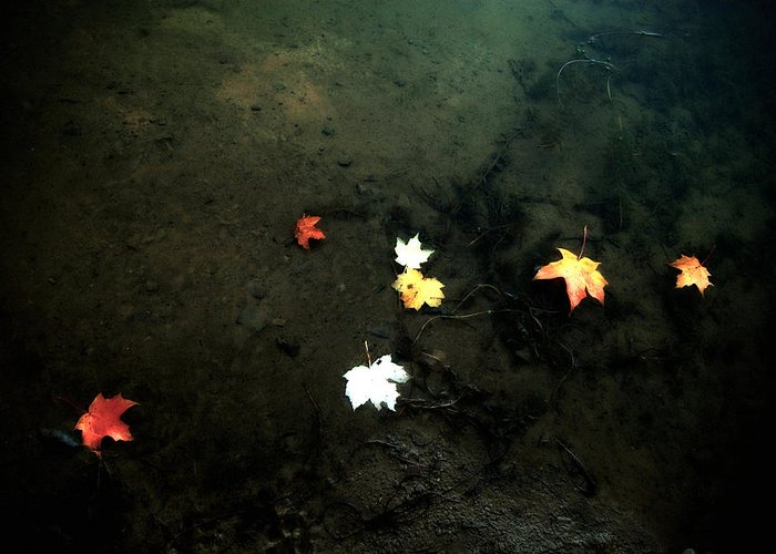 Leaves Greeting Card featuring the photograph Seven Leaves At The Pond's Edge by Steven Geer