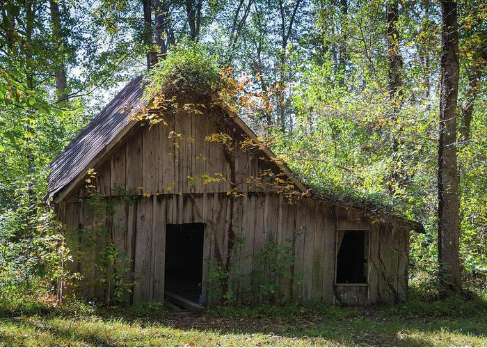 Landscape Greeting Card featuring the photograph Shack In The Woods by John Benedict