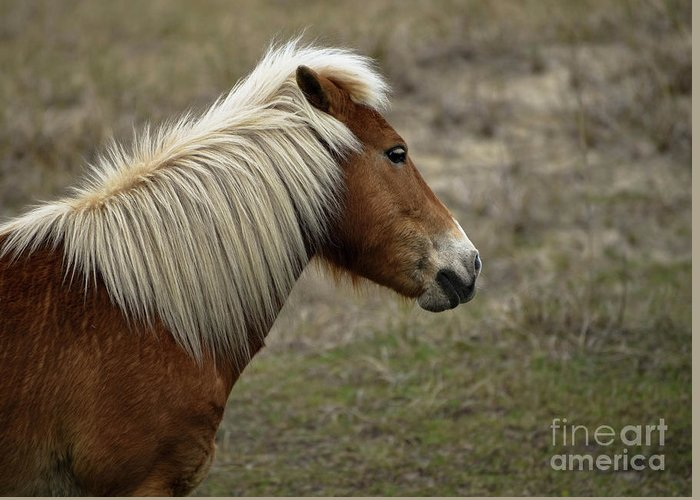 Shackleford Banks Greeting Card featuring the photograph Shackleford Banks by Debbie Morris