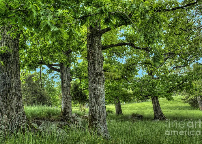 Peace Project Greeting Card featuring the photograph Shade Trees by Pete Hellmann