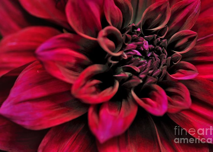 Photography Greeting Card featuring the photograph Shades Of Red - Dahlia by Kaye Menner