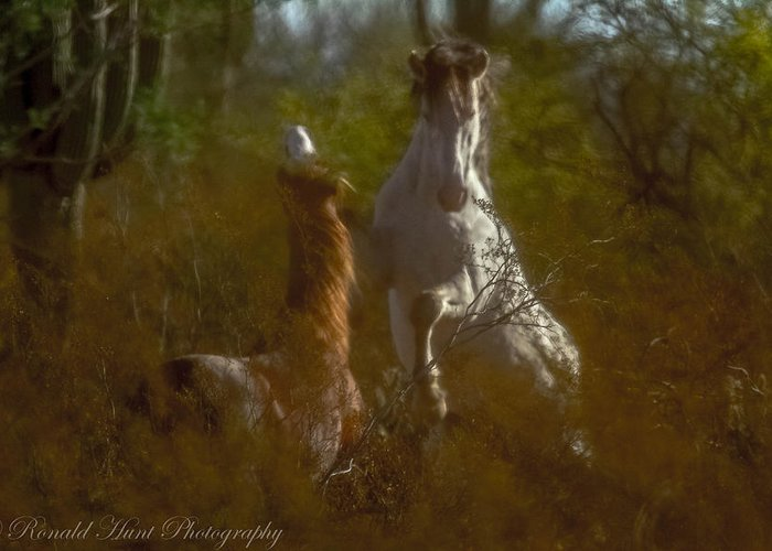 Salt River Wild Horses Greeting Card featuring the photograph Shadow Fighting by Ronald Hunt