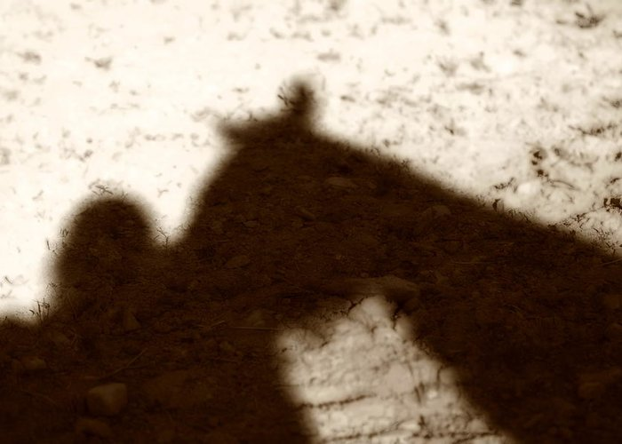 Shadow Greeting Card featuring the photograph Shadow Of Horse And Girl by Angela Rath
