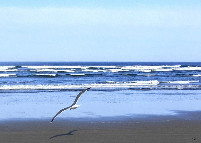 Seagull Greeting Card featuring the photograph Shadow On The Sand by Will Borden