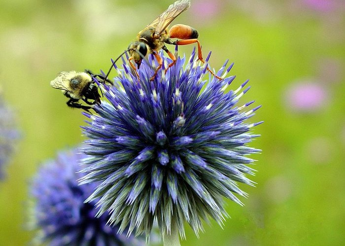 Bees Greeting Card featuring the photograph Sharing by Paul McCarthy