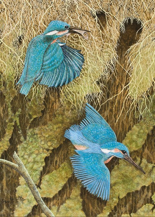 Kingfisher Greeting Cards