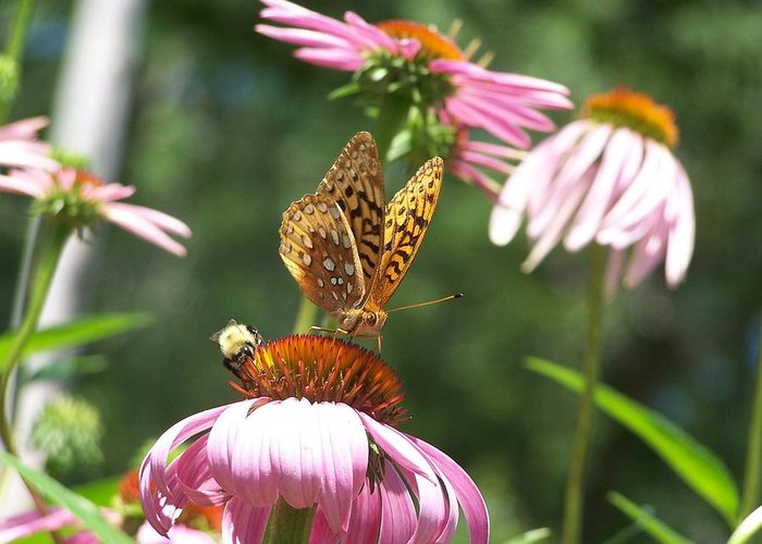 Great Spangled Fritillary Greeting Card featuring the photograph Sharing The Goodness by Tammy Doherty