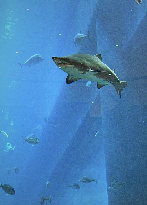 Aquarium Greeting Card featuring the photograph Sharknado In Dubai by Mario MJ Perron