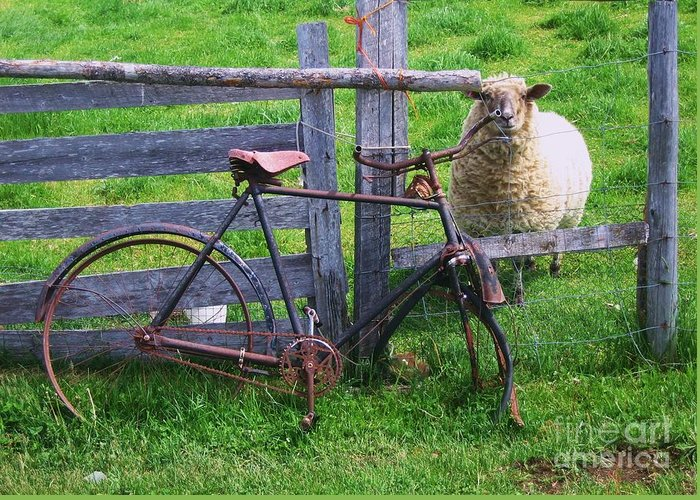 Photograph Sheep Bicycle Fence Grass Greeting Card featuring the photograph Sheep And Bicycle by Seon-Jeong Kim