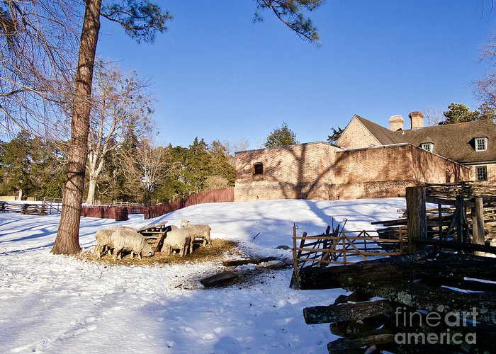 Colonial Williamsburg Greeting Card featuring the photograph Sheep Farm In Winter by Rachel Morrison