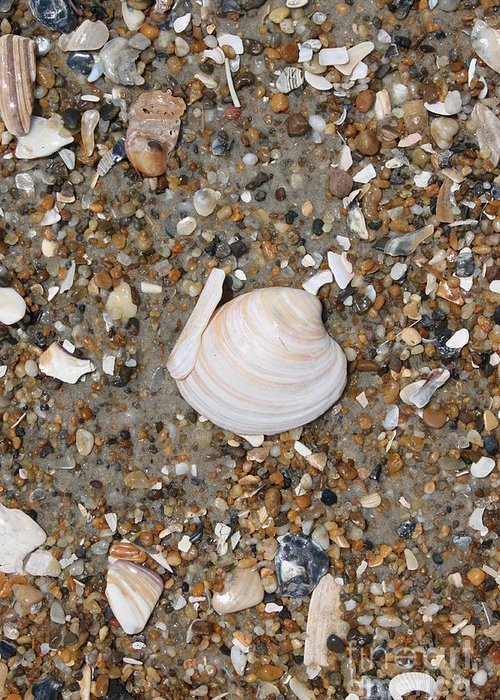 Beach Greeting Card featuring the photograph Shell 1 by Marcie Daniels