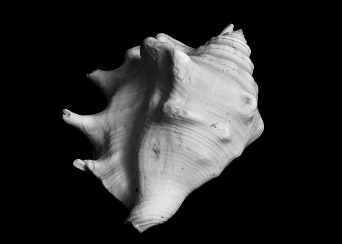 Seashell Greeting Card featuring the photograph Shell No. 2 by Henry Krauzyk
