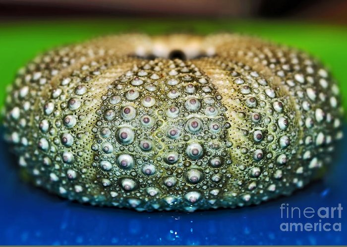Photography Greeting Card featuring the photograph Shell With Pimples by Kaye Menner