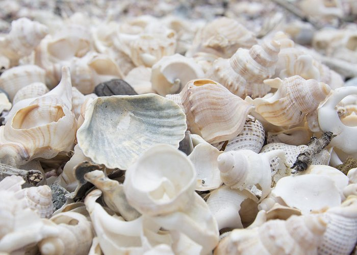 Sea Shells Greeting Card featuring the photograph Shells 2 by Jocelyn Friis