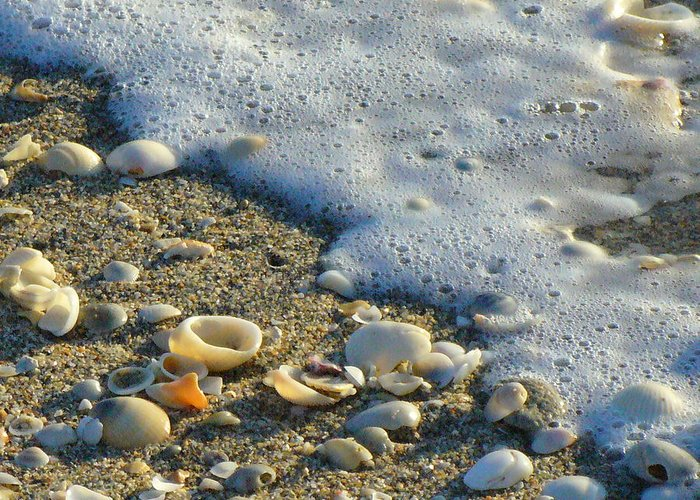Shells Greeting Card featuring the photograph Shells And Seafoam by Peggy King