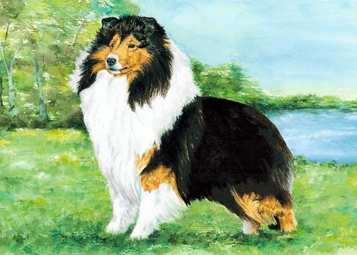 Shetland Sheepdog Greeting Card featuring the painting Sheltie Wait by Kathleen Sepulveda