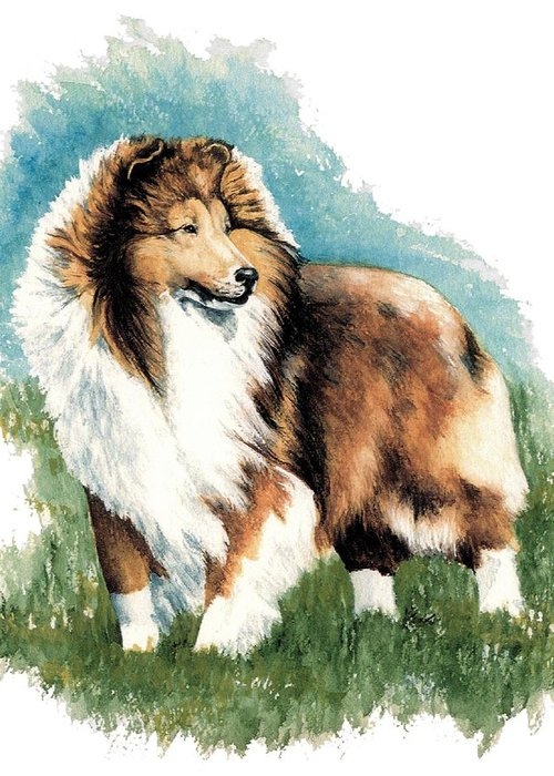 Shetland Sheepdog Greeting Card featuring the painting Sheltie Watch by Kathleen Sepulveda