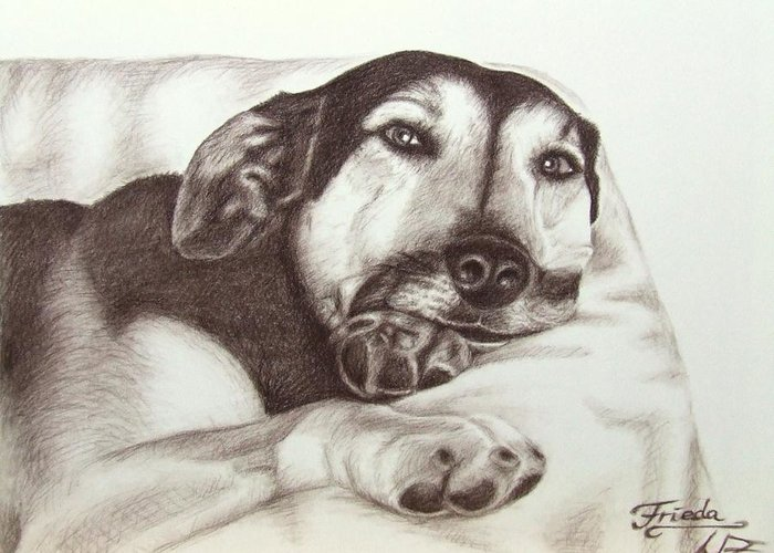 Dog Greeting Card featuring the drawing Shepherd Dog Frieda by Nicole Zeug