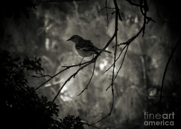 Nature Greeting Card featuring the photograph Shhhh A Bird by Amy Delaine