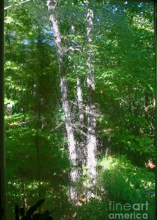 Trees Greeting Card featuring the photograph Shimmer Tree by Beebe Barksdale-Bruner