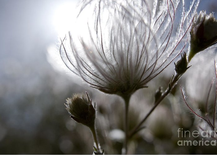 Abstract Greeting Card featuring the photograph Shimmering Flower I by Ray Laskowitz - Printscapes