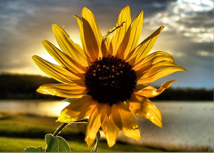 Sun Greeting Card featuring the photograph Shine Down by Karen M Scovill