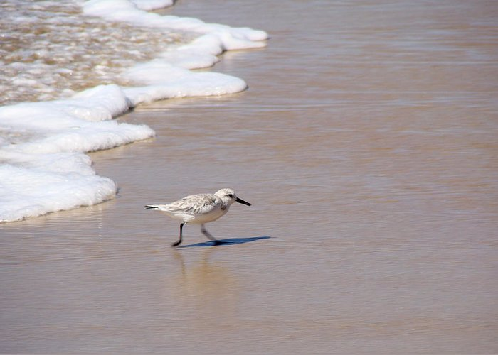 Nature Greeting Card featuring the photograph Shorebird by Ty Nichols