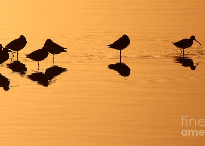 Shorebird Greeting Card featuring the photograph Shorebirds On The Sea At Sunrise by Max Allen