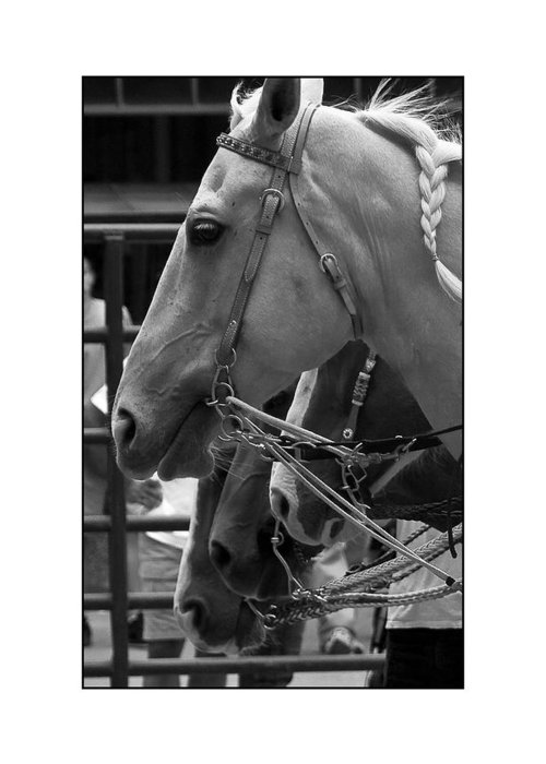 Horse Greeting Card featuring the photograph Show Horses by Filipe N Marques