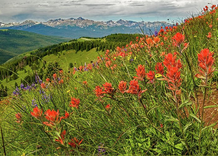 Wildflowers Greeting Card featuring the photograph Shrine Pass Wildflowers by Jim Bennett