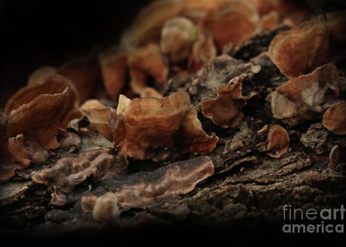 Mushroom Photography Greeting Card featuring the photograph Shrooms by Kim Henderson