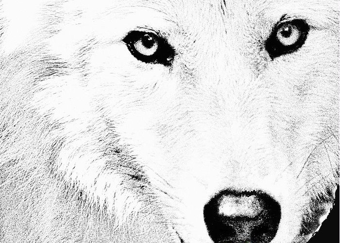 Large Male Wolf Greeting Cards