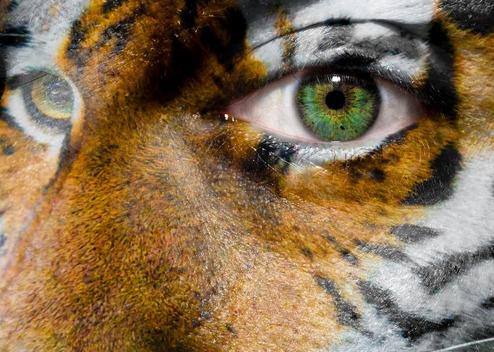 siberian Tiger Greeting Card featuring the photograph Siberian Man by Semmick Photo