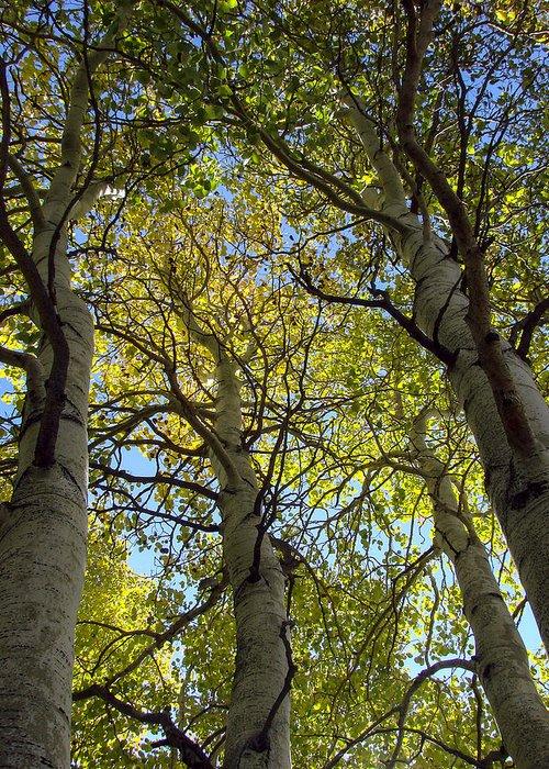 Sierra Nevada Aspens Greeting Card featuring the photograph Sierra Nevada Aspen Fall Color by Scott McGuire