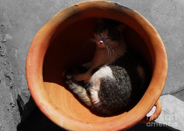 Cat Greeting Card featuring the photograph Siesta 1 by Xueling Zou