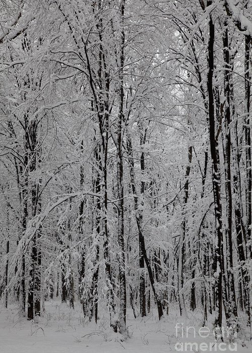 Winter Greeting Card featuring the photograph Silence Of Winter by Gabriela Insuratelu