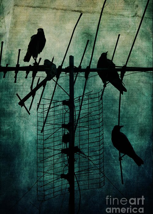 Crows Greeting Card featuring the photograph Silent Threats by Andrew Paranavitana