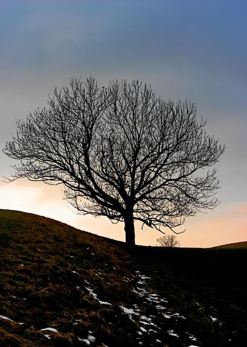 Tree Greeting Card featuring the photograph Silhouette Of A Tree On A Winter Day by Christine Till