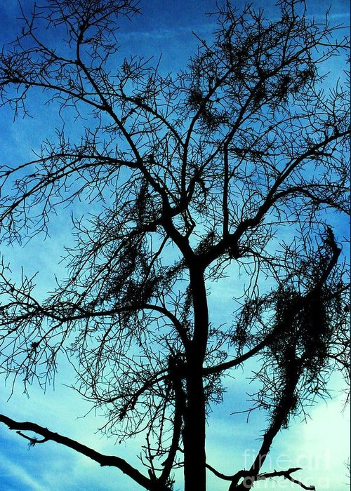Tree Greeting Card featuring the photograph Sillouette 3 by Maria Young