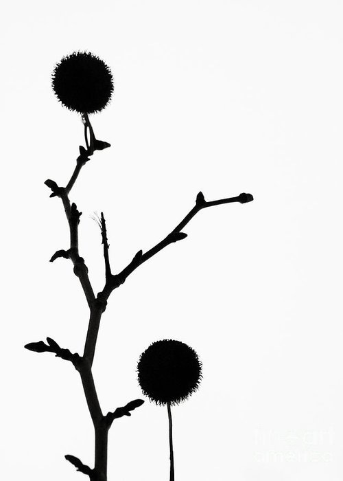 Simple Greeting Card featuring the photograph Simple Silhouette 3 by Tara Turner
