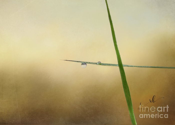 Rrea Brown Photography Greeting Card featuring the photograph Simplicity by Rrea Brown
