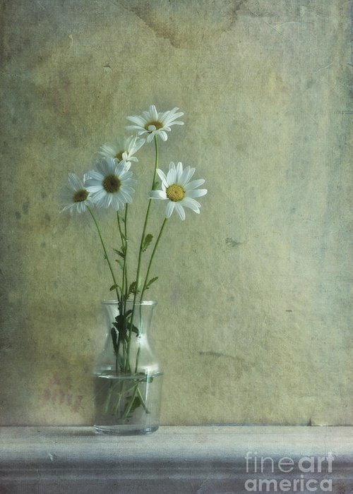 Daisy Greeting Card featuring the photograph Simply Daisies by Priska Wettstein