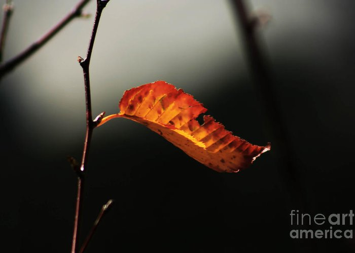 Fall Season Greeting Card featuring the photograph Single Fall Color Leaf by Robin Lynne Schwind