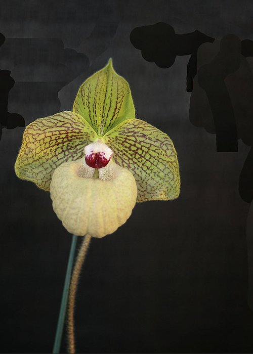 Orchid Greeting Card featuring the photograph Single Orchid by Liz Santie