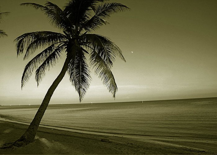 Palm Tree Greeting Card featuring the photograph Single Palm At The Beach by Susanne Van Hulst