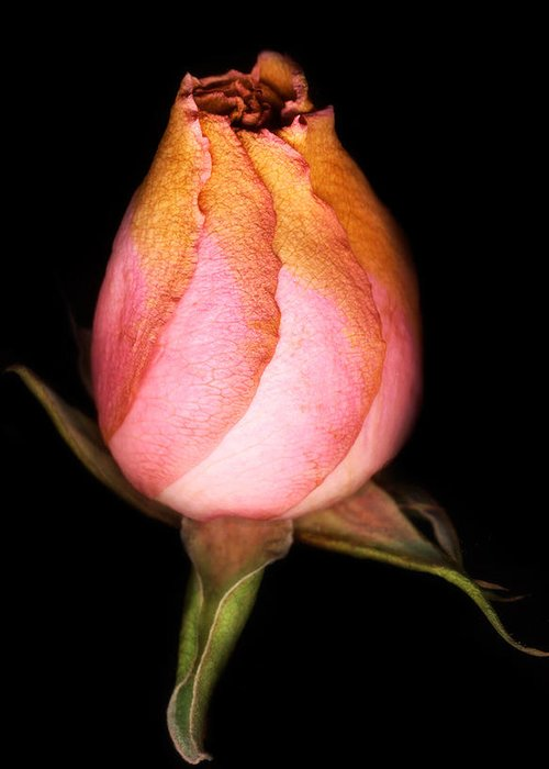 Rose Greeting Card featuring the photograph single Rose by Marilyn Hunt