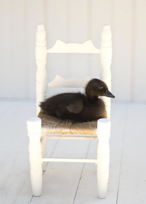 Duckling Greeting Card featuring the photograph Sitting Duck by Amy Tyler