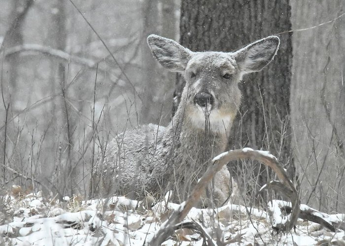 Deer Greeting Card featuring the photograph Sitting Out The Storm by Michael Peychich