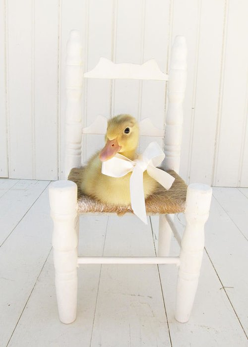 Duckling Greeting Card featuring the photograph Sitting Pretty by Amy Tyler