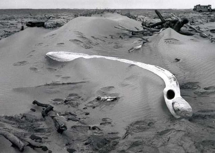Skeleton Coast Greeting Card featuring the photograph Skeleton Coast Whalebone by Susan Chandler